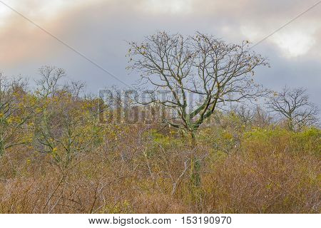 Meadow Scene Landscape Guayas Ecuador