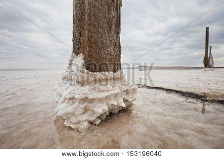 Old Wooden Pile On Saline (salt Lake) Baskunchak Landscape.