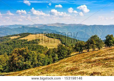 Classic Carpathian Mountain  Landscape In Summer
