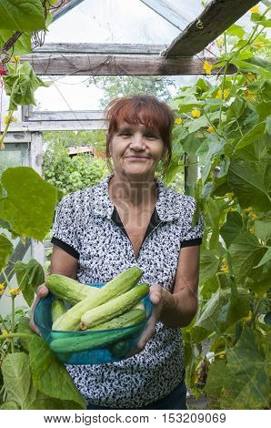 Happy pensioner holding a cucumber while standing in a greenhouse