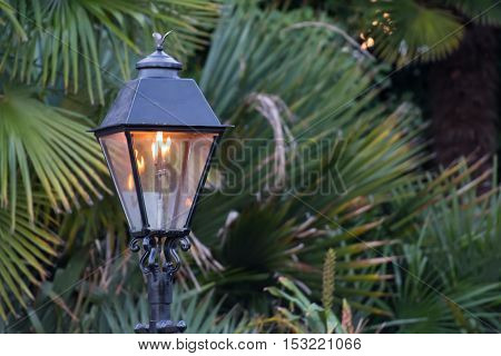 Gas Lamp with Copy Space to Right over spiky shrubbery