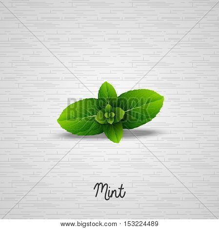 Illustration of  Fresh green mint leaves background