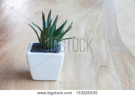 Green plant in pot on wooden table, stock photo