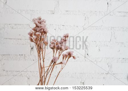 Bouquet of dried flowers with white background, stock photo