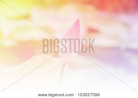 Blurred of lotus flowers blooming. in the pastel color style for background.