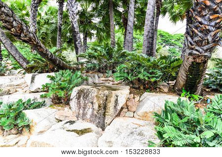 Plant and Rock background in the garden