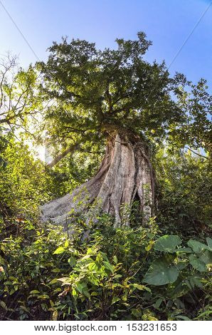 Majestic old big tree during daytime with fish-eye view