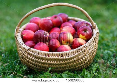 Basket With Apples In The Grass