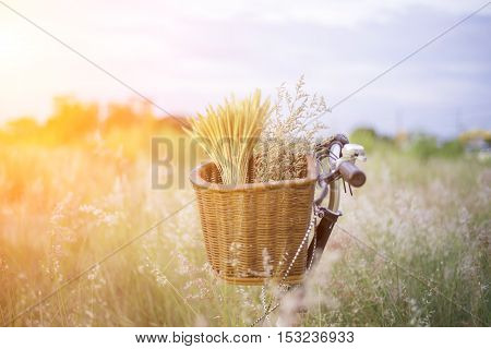 Bicycle with basket and guitar of flowers in meadow select and soft focus