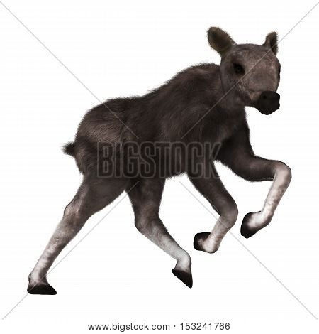 3D Rendering Caribou Calf On White