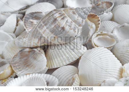 Sea shells on white - abstract nature background.