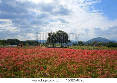 red flower, gree tree, nature and blue sky