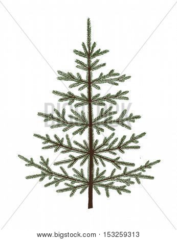 Empty fir tree. Christmas greeting card. Hand-drawn illustration.