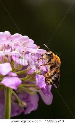 Low Angle View Of Feeding Bee