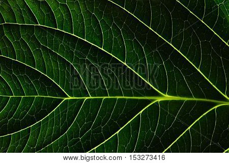 Green leaf texture. Macro. Plant detail background.