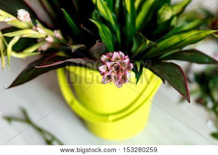 Bouquet of flowers in bucket - workshop place