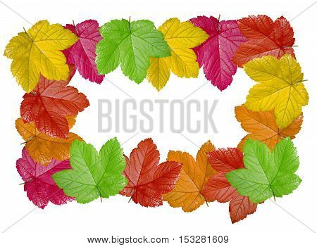 Colorful leaves frame isolated on white background