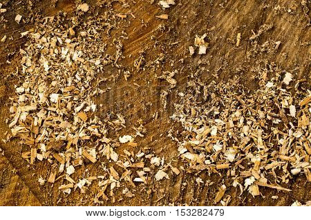 A closeup shot of sawdust on the sawn tree trunk