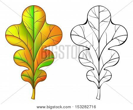 Colorful and black and white pattern oak leaf, vector cartoon image.