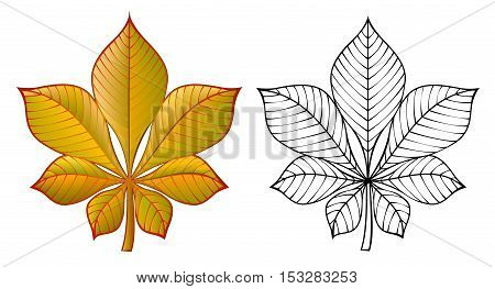 Colorful and black and white pattern chestnut leaf, vector cartoon image.