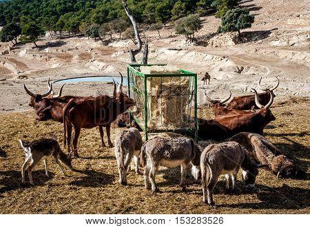 Animals feeding at Safari park of Aitana. Alicante province. Spain