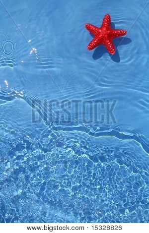 Cute starfish in the water