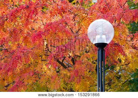 The Sharpness Of The Pictures On The Street Lights. Texture, Pattern, Background. Street Lamp Tree A