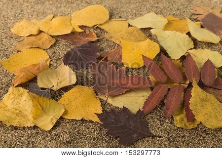 yellow autumn leaves on the sand with a shallow depth of field