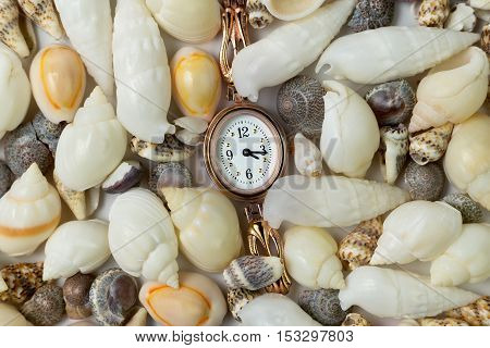 small gold watch surrounded sea shells close-up