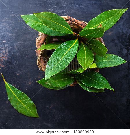 Fresh organic bay leaves in a basket on a grunge rusty black table. Selective focus, top view overhead flat lay