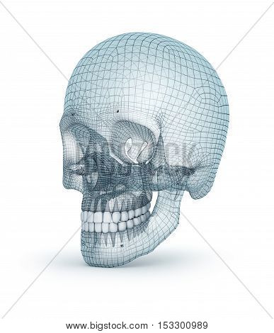 Human skull wire model 3D render, over white