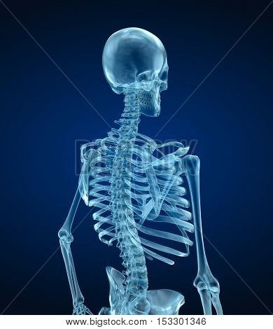 Human skeleton - head Medically accurate 3d illustration .