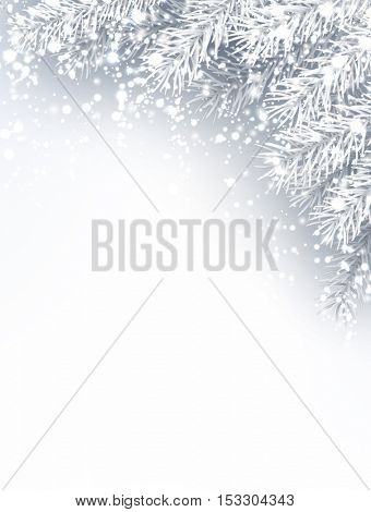 Gray winter background with fir branches and snow. Vector illustration.