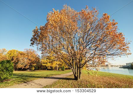 autumn landscape with an oak in the foreground