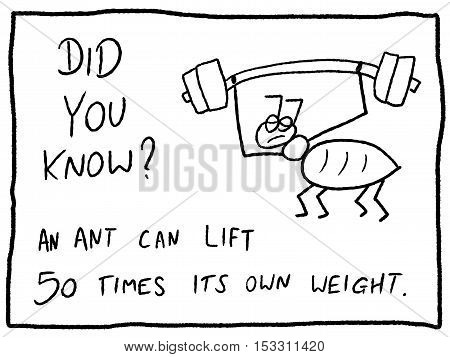 Insect Facts