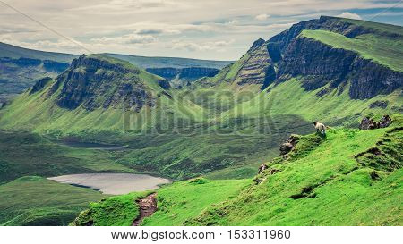 Stunning View To Sheeps In Quiraing, Isle Of Skye, Scotland