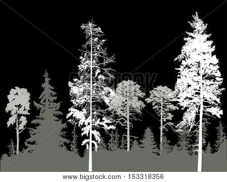 ilustration with pine forest silhouettes isolated on black background