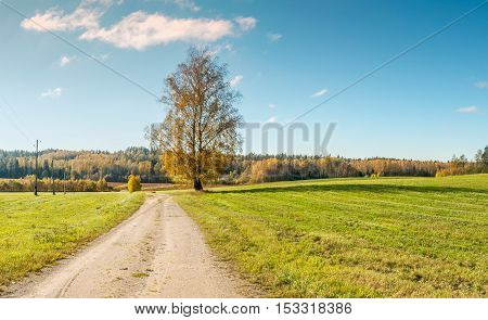 Countryside landscape with road and lonely birch tree, Europe
