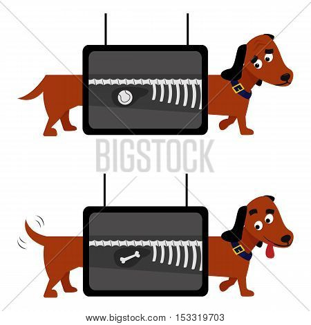 X-ray dog examination carton vector illustration. Animal health veterinary medicine.