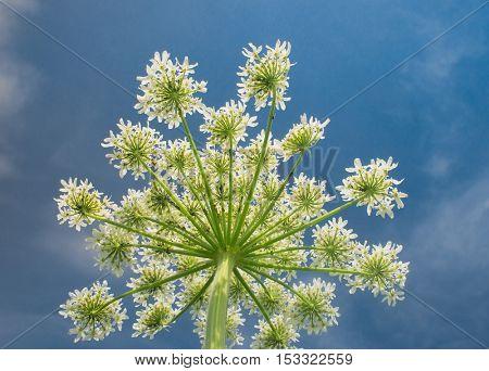 Cute Flower White Blossoms