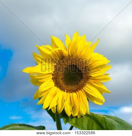 In a Field Yellow Flower