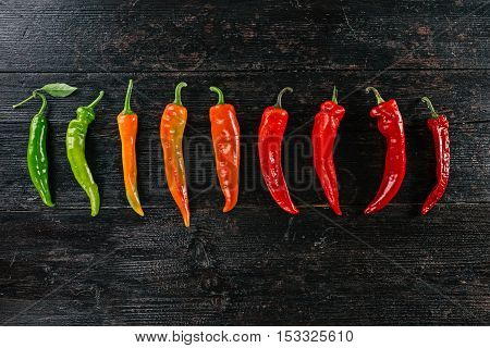 Row of hot peppers gradually changing their color from green to dark red