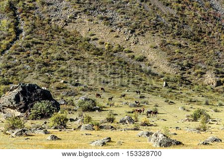 Scenic view with a herd of horses grazing on a hillside with bushes grass and large boulders