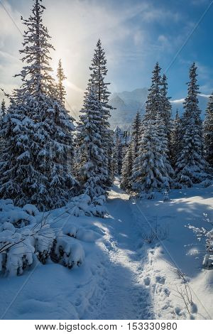 Winter forest in Tatras Mountains with full of snow, Poland