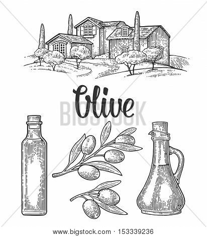 Bottle and Jug glass of liquid with olives cork stopper and branch with leaves. Rural landscape with villa or farm with field tree and cypress. Vector vintage engraving on white background.