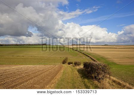 Yorkshire Wolds Hills And Hedgerows