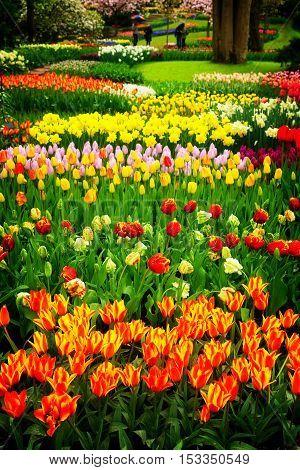 Spring flowers flowerbed in dutch garden, Keukenhof, Netherlands, retro toned
