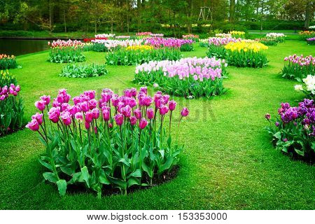 Colourful Tulips Flowerbeds in Attractive Formal Garden, retro toned