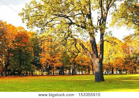Autumn picturesque landscape in vintage tones- sunny autumn landscape park lit by sunshine-autumn park in sunshine. Sunny autumn landscape of autumn park with golden trees