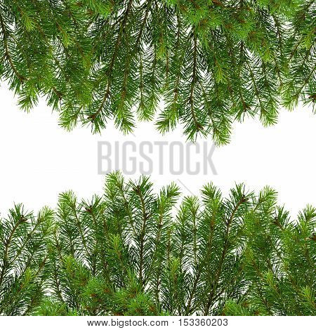 Natural background with space for text. Christmas background. Close-up. Branches of a Christmas tree isolate on white background without shadows. Border